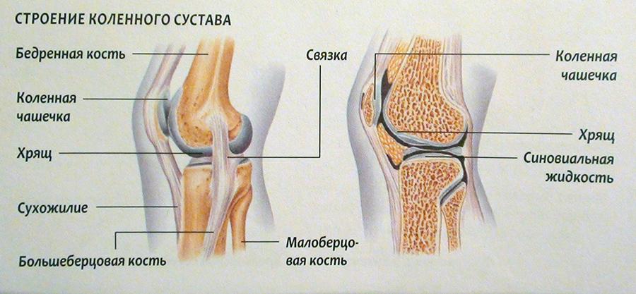Как называется врач который лечит суставы и связки