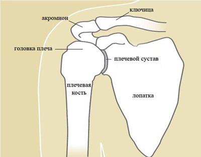 Схемы плечевого сустава